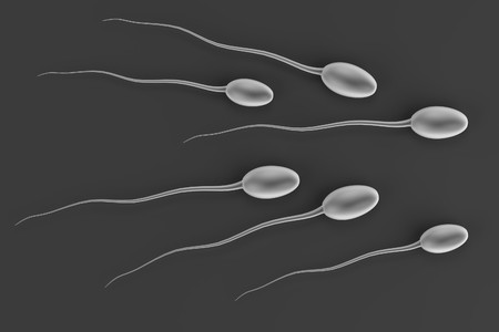 male sperm: realistic 3d render of sperms