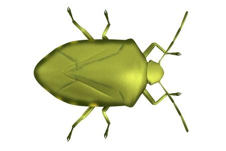 stink: realistic 3d render of stink bug