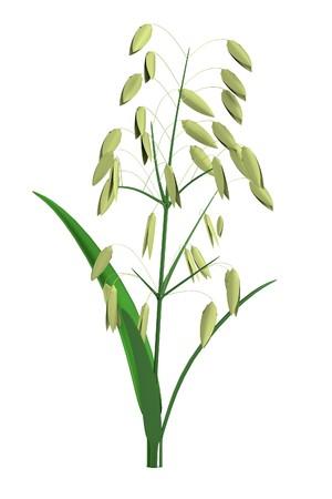 oat field: realistic 3d render of oat