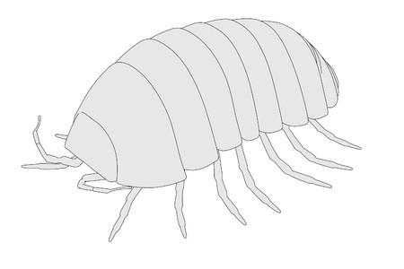 cartoon image of armadillidium vulgare