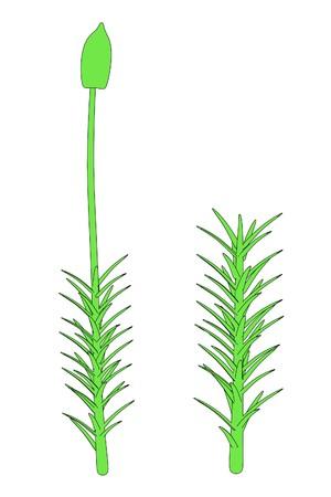 2d: 2d cartoon image of moss plant Stock Photo