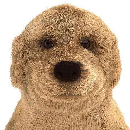 pupy: 3d render of golden retriever puppy Stock Photo