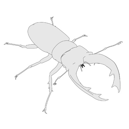 cervus: 2d cartoon image of lucanus cervus