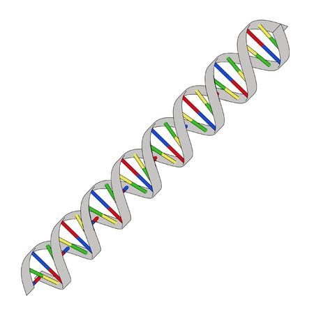 toons: cartoon image of DNA model