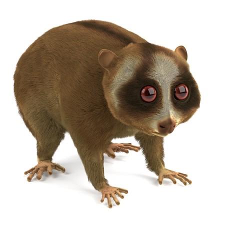 slow: 3d render of slow lori