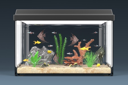 tetra fish: 3d render of fish aquarium