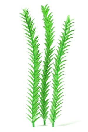 3d render of aquatic plant