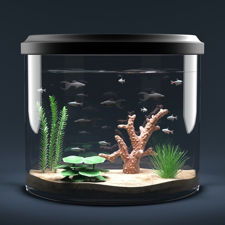 gold fish bowl: 3d render of fish aquarium