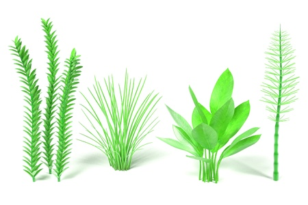aquatic: 3d render of aquatic plants