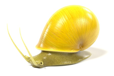 apple snail: 3d render of apple snail