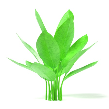 aquatic: 3d render of aquatic plant