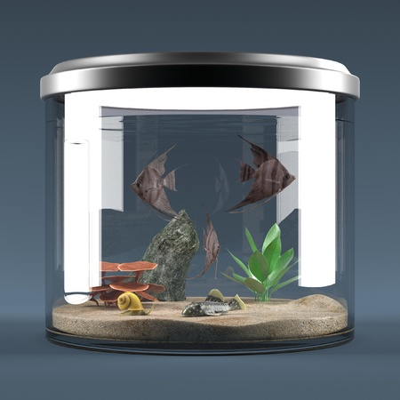molly fish: 3d render of fish aquarium