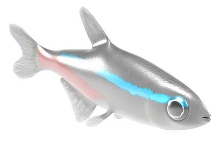 neon fish: 3d render of paracheiroidon innesi Stock Photo