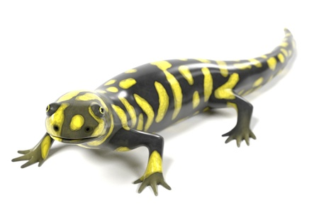 amphibia: 3d render of tiger salamander Stock Photo