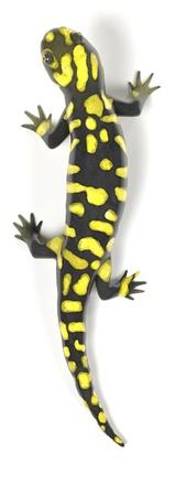 salamandra: 3d de la salamandra tigre Foto de archivo