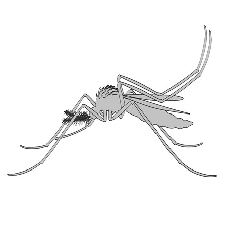 yellow fever: 2d cartoon illustration of Aedes Aegypti Stock Photo