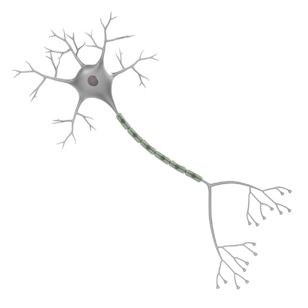 dendrites: 3d render of brain neuron