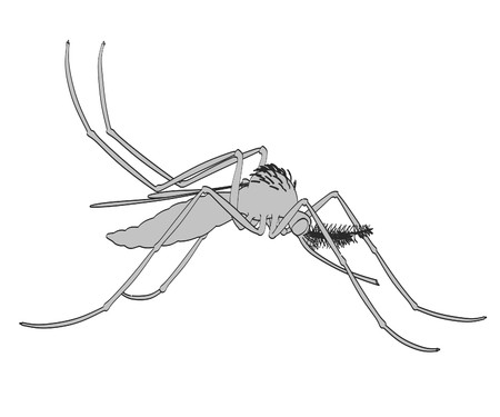 aedes: 2d cartoon illustration of Aedes Aegypti Stock Photo