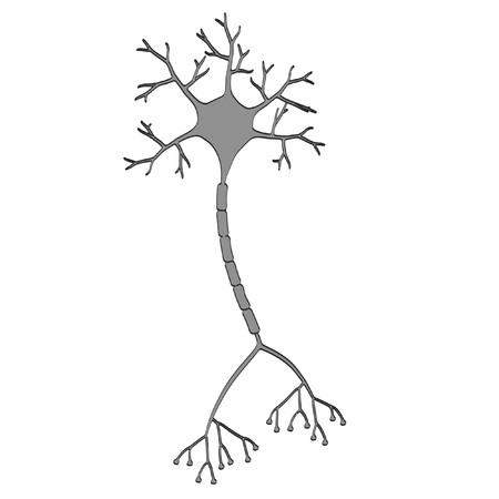 brain illustration: 2d cartoon illustration of brain neuron