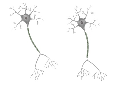 axon: 3d render of brain neuron