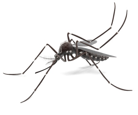 yellow fever: 3d render of Aedes Aegypti