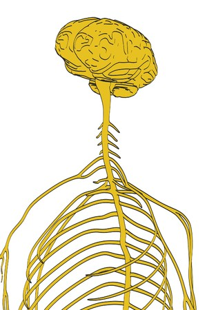 cns: 2d cartoon illustration of nervous system