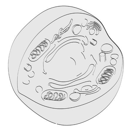 2d cartoon illustration of human cell