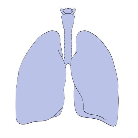 epiglottis: 2d cartoon illustration of lungs
