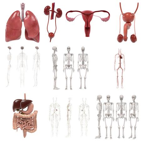 3d renderings of human organs set Stock Photo
