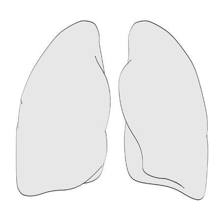 2d: 2d cartoon illustration of lungs