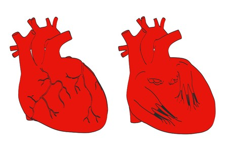vena: 2d cartoon illustration of human heart