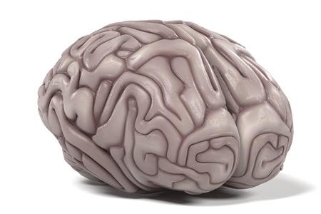 cns: 3d renderings of human brain