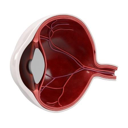 renderings: 3d renderings of eye section