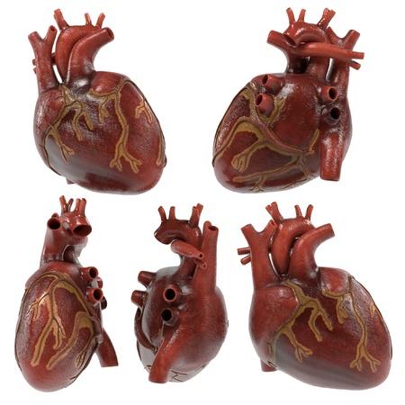 renderings: 3d renderings of human heart