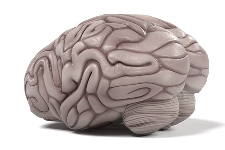 cns: 3d renderings of human brain