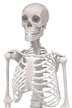 renderings: 3d renderings of human skeleton