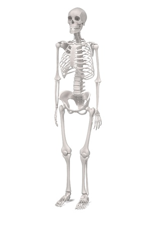renderings: 3d renderings of female skeleton