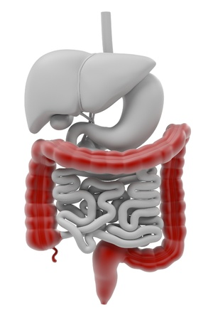 digestive system: 3d renderings of digestive system Stock Photo