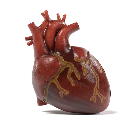 with aorta: 3d renderings of human heart