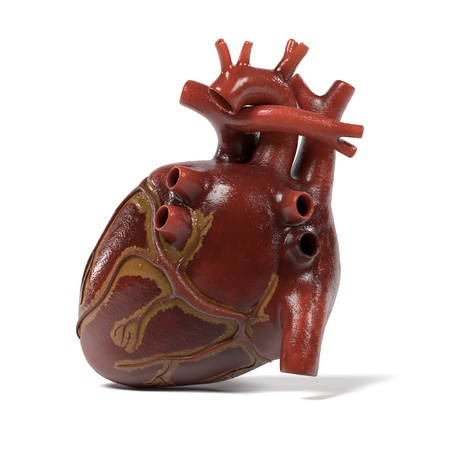 vena: 3d renderings of human heart