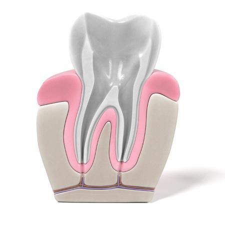 3d renderings of endodontics - root canal procedure Reklamní fotografie - 55898378