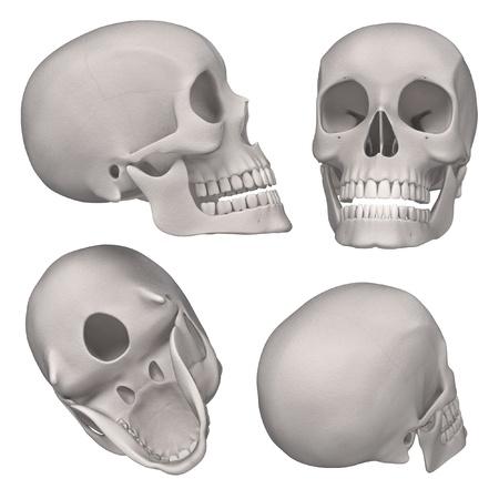 renderings: 3d renderings of male skull
