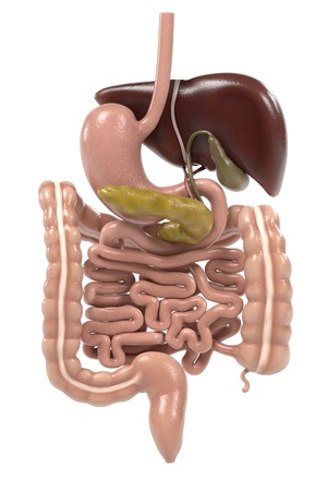 bowel surgery: 3d renderings of digestive system Stock Photo