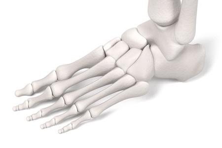 renderings: 3d renderings of leg bones