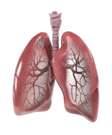 renderings: 3d renderings of human respiratory system