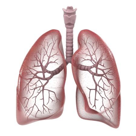 Renderizações 3D do sistema respiratório humano