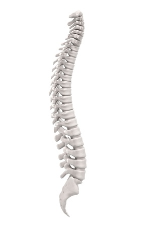 spinal: 3d renderings of spinal cord