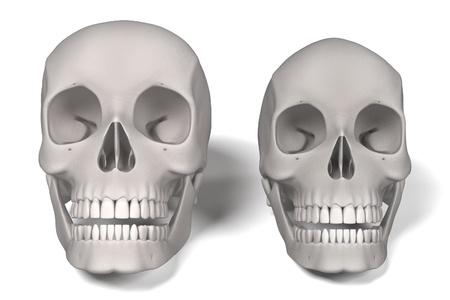 renderings: 3d renderings of human skulls Stock Photo