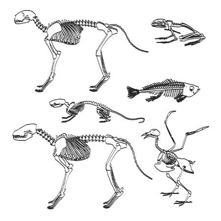 2d cartoon illustratie van dierlijke skeletten Stockfoto