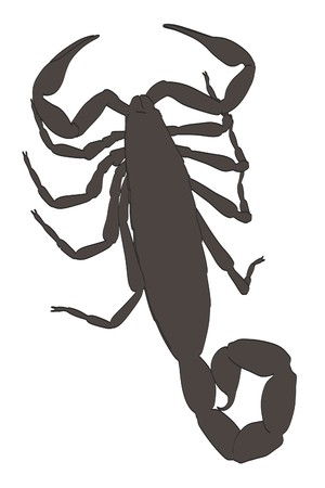 bark: 2d cartoon illustration of scorpion